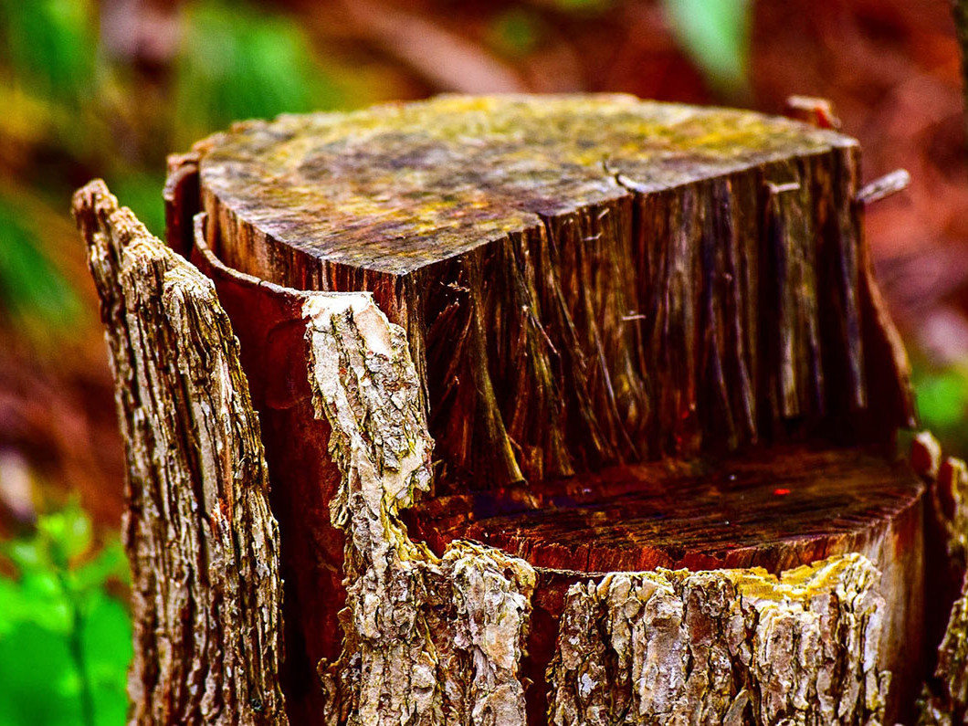 Check out the benefits of removing that old stump